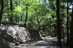 自然の中でのハイキングの写真素材 [FYI03124732]