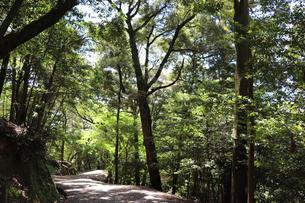 森のハイキングの写真素材 [FYI03124737]