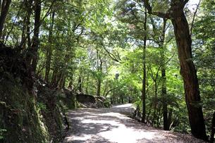森の遊歩道の写真素材 [FYI03124738]
