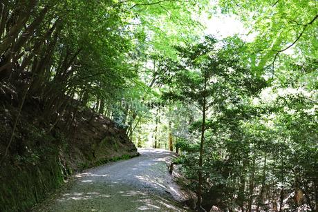 林の中をハイキングの写真素材 [FYI03124739]