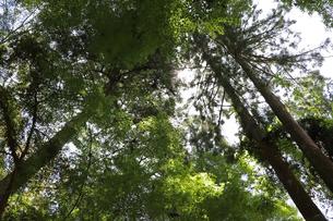 森の木漏れ日の写真素材 [FYI03124740]