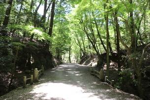 奈良・春日山原始林の写真素材 [FYI03124742]