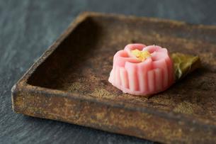 桜のお茶菓子の写真素材 [FYI03124780]