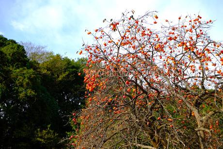 秋にみのる果実の写真素材 [FYI03125412]