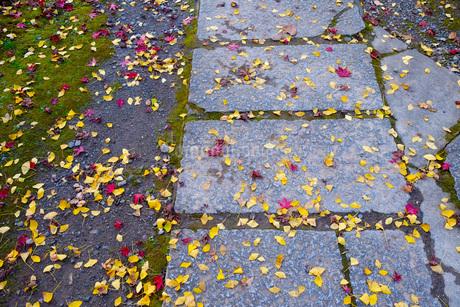 道の上の落ち葉の写真素材 [FYI03125414]