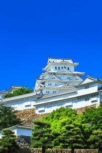 姫路城と快晴の空の写真素材 [FYI03125445]