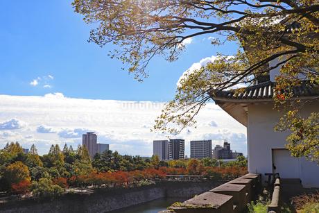 秋の大阪城公園の写真素材 [FYI03125482]