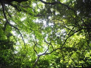 森と木漏れ日の写真素材 [FYI03125804]