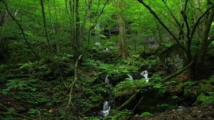 スッカン沢の苔むす秘境の滝と自然の写真素材 [FYI03125898]