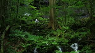 スッカン沢の苔むす秘境の滝と自然の写真素材 [FYI03125899]
