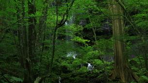 スッカン沢の苔むす秘境の滝と自然の写真素材 [FYI03125900]