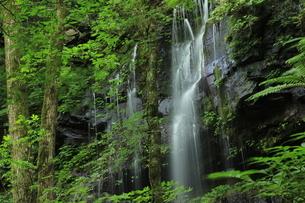 スッカン沢の苔むす秘境の滝と自然の写真素材 [FYI03125901]