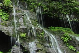 スッカン沢の苔むす秘境の滝と自然の写真素材 [FYI03125902]