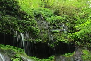 スッカン沢の苔むす秘境の滝と自然の写真素材 [FYI03125903]