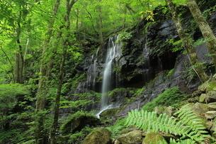 スッカン沢の苔むす秘境の滝と自然の写真素材 [FYI03125904]