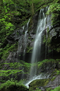 スッカン沢の苔むす秘境の滝と自然の写真素材 [FYI03125905]