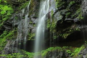 スッカン沢の苔むす秘境の滝と自然の写真素材 [FYI03125907]