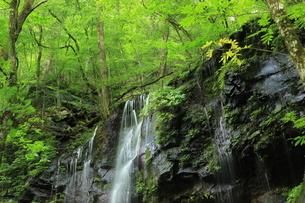 スッカン沢の苔むす秘境の滝と自然の写真素材 [FYI03125908]