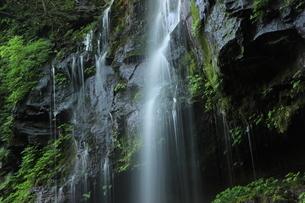 スッカン沢の苔むす秘境の滝と自然の写真素材 [FYI03125909]