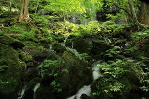 スッカン沢の苔むす秘境の滝と自然の写真素材 [FYI03125911]