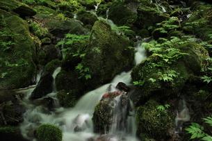 スッカン沢の苔むす渓流の写真素材 [FYI03125912]