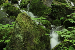 スッカン沢の苔むす渓流の写真素材 [FYI03125914]