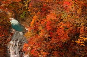紅葉の那須駒止めの滝の写真素材 [FYI03125986]