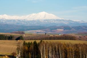 秋の畑作地帯と雪山 大雪山の写真素材 [FYI03126070]