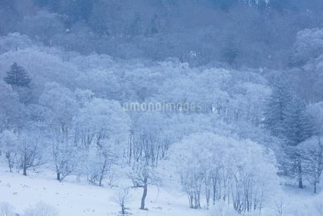 美幌峠の樹氷の写真素材 [FYI03126275]