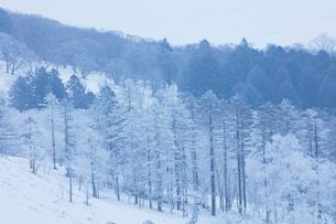 美幌峠の樹氷の写真素材 [FYI03126276]