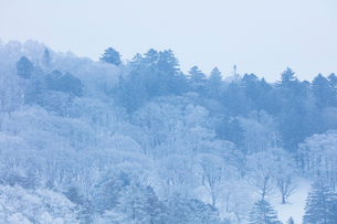 美幌峠の樹氷の写真素材 [FYI03126278]