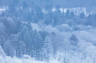 美幌峠の樹氷の写真素材 [FYI03126279]