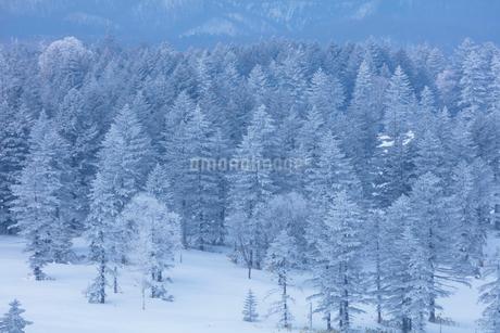 美幌峠の樹氷の写真素材 [FYI03126280]