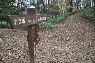 落葉の山道の写真素材 [FYI03126667]