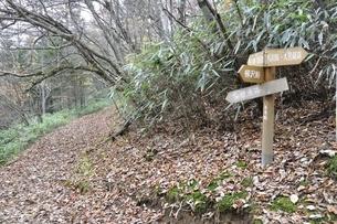 鶏冠山の六本木峠の写真素材 [FYI03126668]