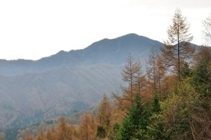 大菩薩嶺とカラマツの黄葉の写真素材 [FYI03126672]