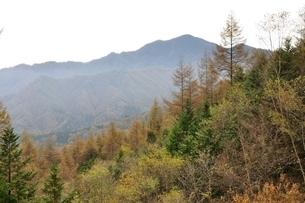 大菩薩嶺とカラマツの黄葉の写真素材 [FYI03126674]