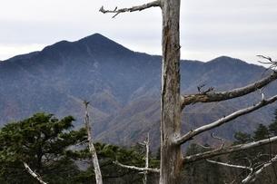 鶏冠山より枯れ木と大菩薩嶺の写真素材 [FYI03126723]