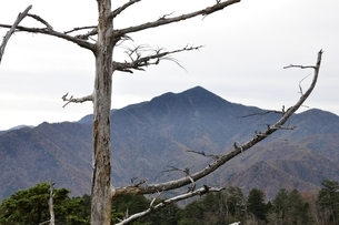 鶏冠山より枯れ木と大菩薩嶺の写真素材 [FYI03126724]
