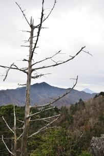 鶏冠山より枯れ木と大菩薩嶺の写真素材 [FYI03126726]