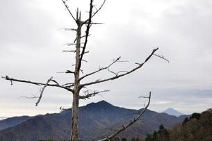 鶏冠山より枯れ木と大菩薩嶺の写真素材 [FYI03126727]