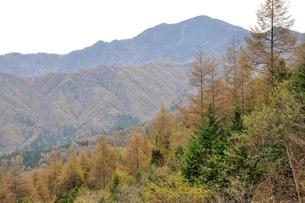 大菩薩嶺とカラマツの黄葉の写真素材 [FYI03126738]