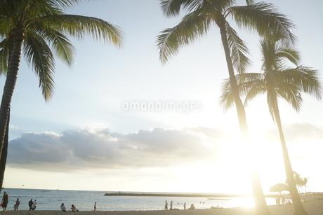 ビーチのヤシの木とサンセットの写真素材 [FYI03126842]