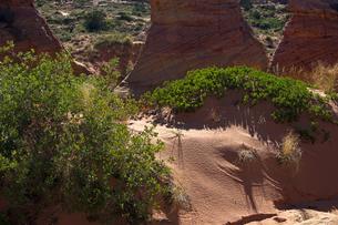 砂丘に生える植物群の写真素材 [FYI03126975]