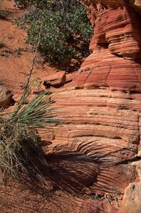 地層が美しく出ている岩面と砂漠の植生の写真素材 [FYI03126996]