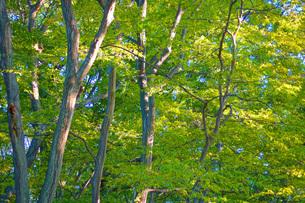 樹木のイメージの写真素材 [FYI03127004]