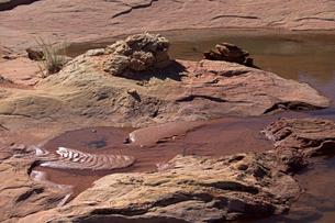 砂漠に広がる砂岩性堆積岩の窪みに溜まった雨水と砂面に見える波紋の写真素材 [FYI03127009]