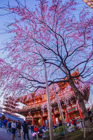 枝垂れ桜と浅草寺の写真素材 [FYI03127036]