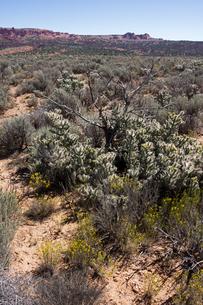 砂漠性気候の平野に広がる植生の写真素材 [FYI03127051]