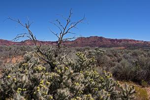 赤い堆積岩の山を背景に荒野に広がる植生の写真素材 [FYI03127052]